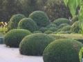 marnix tuinen 020